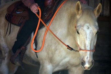 Cookie en stage équitation western avec Jan R. Zweers