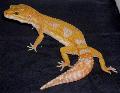 Emerine Tremper Albino