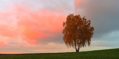 "Erzgebirge, Landschaft, Baum, Birke, Solitärbaum, ""Andreas Hielscher Fotografie"", Naturwelten"