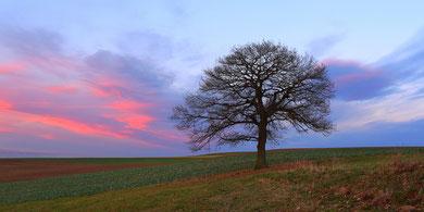 """Erzgebirge, Landschaft, Baum, Eiche, Solitärbaum, Stieleiche, """"Andreas Hielscher Fotografie"""", Naturwelten"""