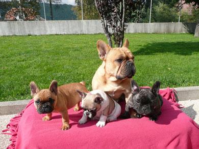 Barney et ses bébés