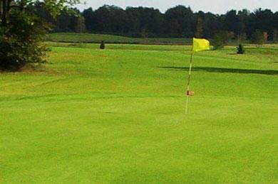 Golfrasen Bodenverbesserer