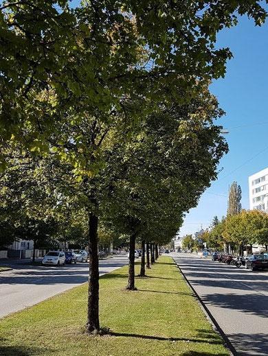 Baumsubstrat interground-Baum 0-32
