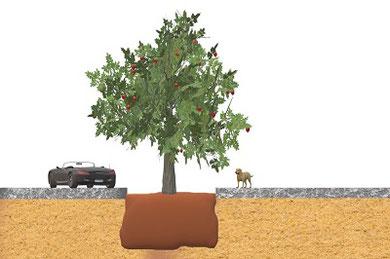 Pflanzgrubenbauweise gemäß FLL 1