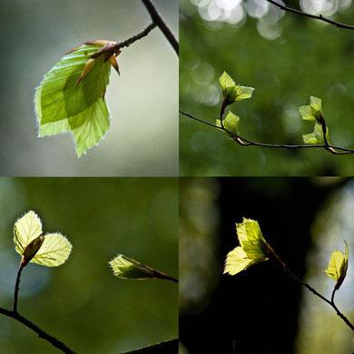 aus: 'Bäume'