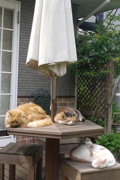 2013・4平塚の庭でくつろぐネコたち
