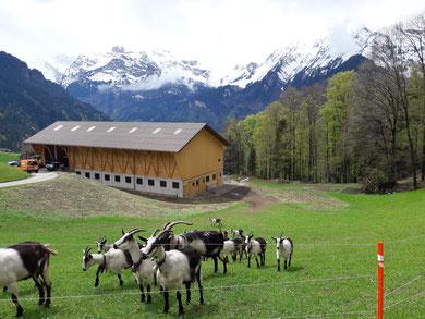 Der Bergbauernhof Ifängi