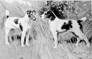 Drahthaar-Foxterrier 1894 (R.B. Lee, The Foxterrier, Enzyklopädie der Jagdhunde)