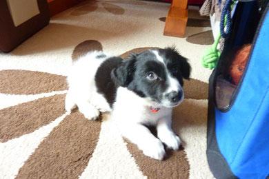 Snoopy (jetzt Oskar) endlich in seiner Familie angekommen :-)