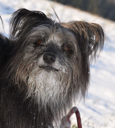 16.1.13 Spaziergang Chrischona mit Marlies - juhu Schnee