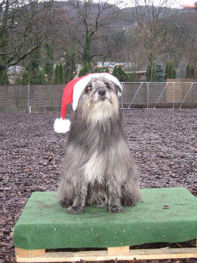 Pech, wenn man am Nikolaustag Hundesport hat, die Trainerin hat so verrückte Ideen...