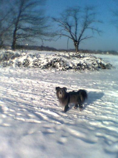 in Stulpen im Schnee