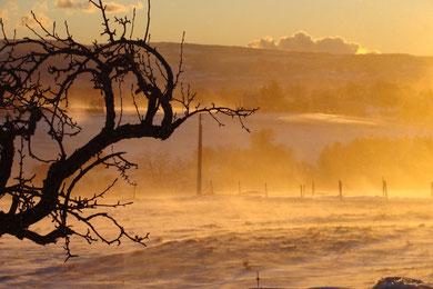 neige et mistral au Revest du Bion