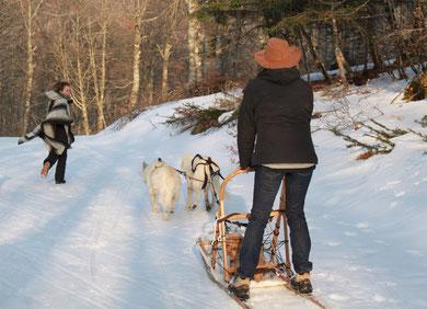 berger blanc suisse chien de traineau aigoual pyrenées alpes esperou prat peyrot chiot à vendre annonce élevage qualité garantie