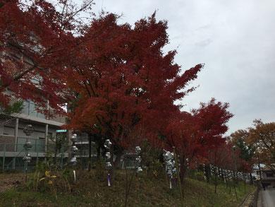 売布神社前の紅葉