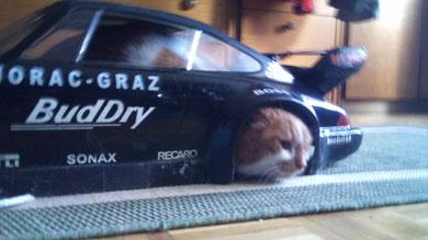Miau, Miau ich hab in der Linkskurve das Rad verloren, Schei.e!