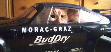 Der neue MORAC Clubfahrer/Kater Othello Prochaska /Porsche 911