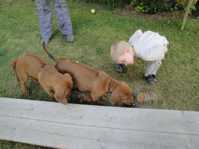 """Enkelkind Luca: """"Da liegt doch tatsächlich einer unter dem Brett und schläft!"""" Na, so etwas!!!"""