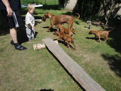 Nanga beim Spiel mit dem Hasenfellfutterbeutel