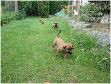 Der erste Ausflug in den Garten....