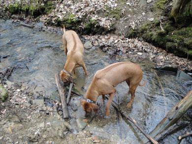 Nanga (rechts) beim Leckerli angeln