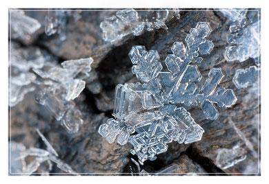 Das Bild zeigt einen ca 3mm kleinen Eiskristall, welcher mit einem 0815 Kitobjektiv in Retrostellung aufgenommen wurde. Der Abbildungsmaßstand ist hier echt enorm. Merge-Produkt aus 2 Fotos.