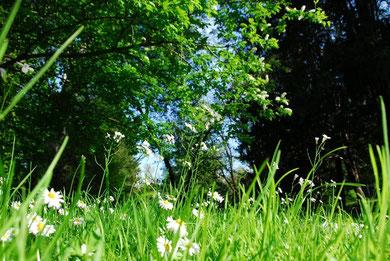 Gerald - Foto 3 - Frühling aus der Perpektive eines Frosches