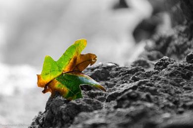 Dieses Bild soll die Vergänglichkeit des Sommers und die Ankunft des Herbst zeigen.