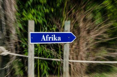 Martin F. (Foto 4) Afrika: Zoom Burst in die Wildnis