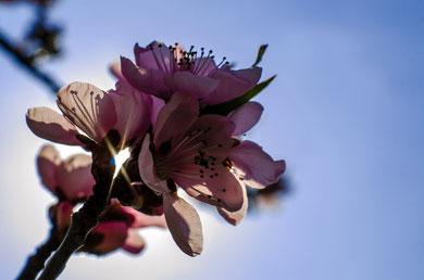 Martin F.- Foto 8 - Spring blossom, aufblühen in den wärmenden Sonnenstrahlen.