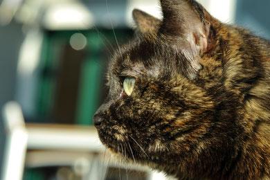 Als Vorbereitung für den Porträtkurs habe ich meine Katze porträtiert…
