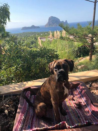 Bojangles alias Bojo gerade mal 6 Monate und ein paar Tage grüßt dieses Mal aus Ibiza