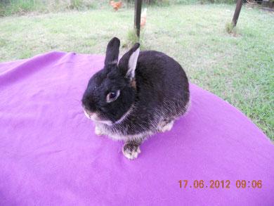 Pulsa sobre la foto para ver generalidades sobre las razas de conejos