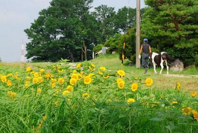 朝のお散歩 photo by 白鳥保美