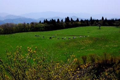 茶臼山高原牧場 Photo By 白鳥保美