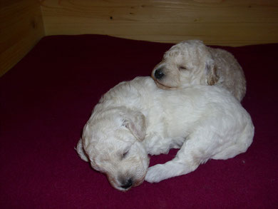 unten Brutus & Beverly, 18 Tage alt