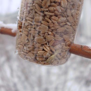 Garten - Upcycling - Vogelfutterspender aus Plastikflaschen basteln - DIY-Projekt