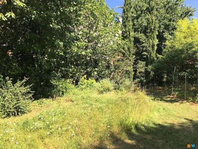 Un espace de pelouse non tondu dans mon jardin naturel