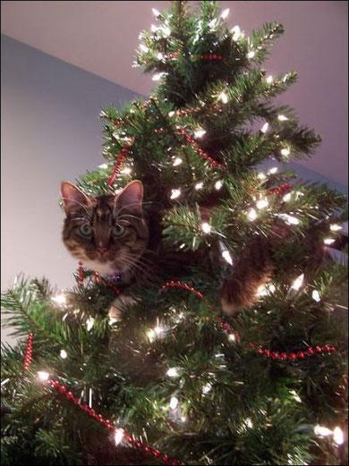 クリスマス 猫