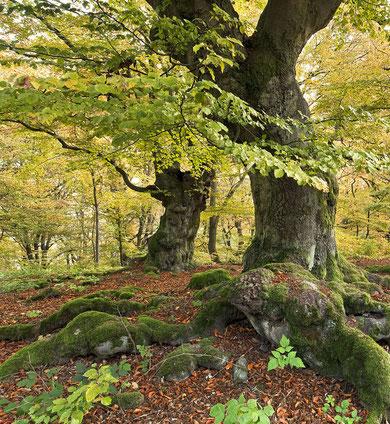 Baum Weisheit der Wurzeln
