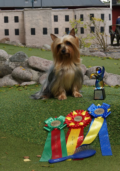 National show Småland-Ölands Sweden 5-6 september 2015,expert Hasselgren Birgitta: Kasiopea Bohemia Xsantia (Champion class): excellent 1, САС, ВОВ. The new champion of Sweden! New Nordic Champion!
