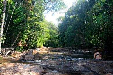 randonnée découverte de la nature en guyane