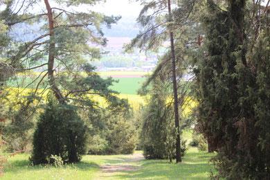Herrlicher Wanderweg oberhalb von Nüdlingen -Haard
