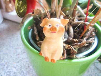 dieses Schweinderl hab ich zum Neuen Jahr bekommen...ich finde , es ist sehr glücklich und freut sich auch auf 2013