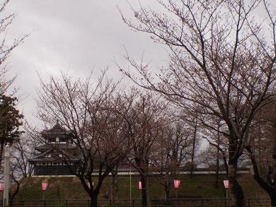 今日の高田公園。1年ぶりの再会まであとわずか