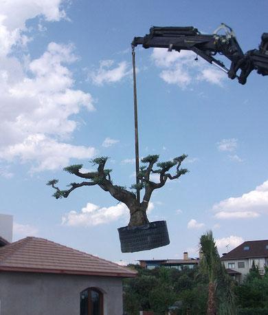 Empresa de jardiner a en madrid ricotrebol - Trabajo de jardineria en madrid ...