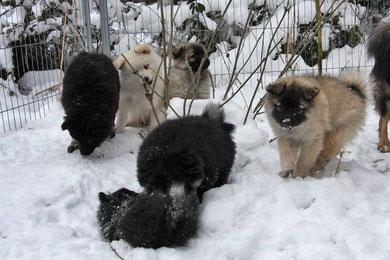 zweiter Wurf: Jamira, Jazinga, Josita, Jikolina, Juno und Jesolo