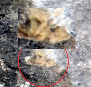 Eine Aufnahme einer Felszeichnung. Die restlichen Fotos von weiteren Zeichnungen  werden wir wegen evt. Verwüstungen nicht veröffentlichen.