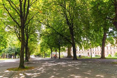 Tree Substrates