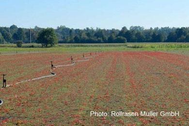 Vegetation mat substrates